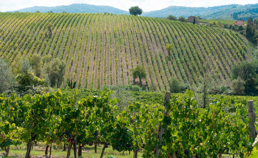 sacav-valpolicella-winegrowing